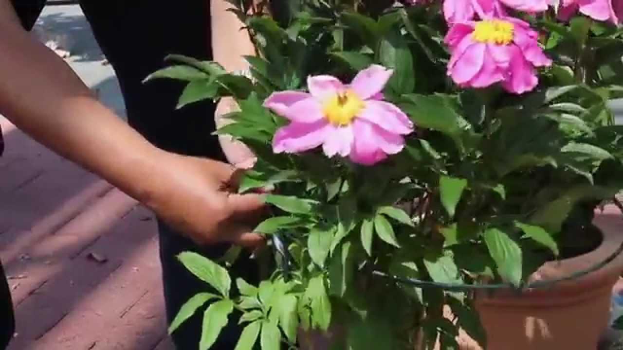 Klettergerüste Für Rosen : Videoanleitung rankhilfen für rosen hauenstein rafz