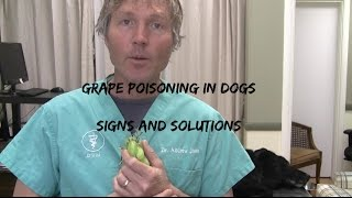 Grape Poisoning In Dogs