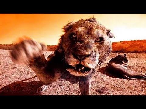 8 крутых фильмов про животных людоедов! фильмы на реальных событиях
