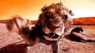 8 ФИЛЬМОВ ПРО ЖИВОТНЫХ ЛЮДОЕДОВ! фильмы на реальных событиях