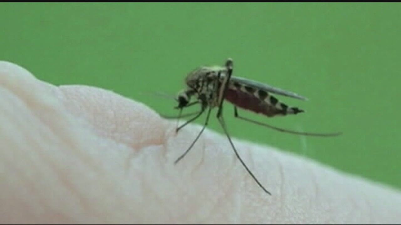 1st mosquitoes test positive for West Nile in La Salle County