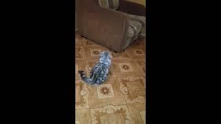 Кошка злее собаки.))) Вот кто в доме хозяйка. )))
