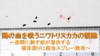 鶏の血を吸うニワトリヌカカの駆除~夜間に刺す蚊が潜伏する寝床周りに殺虫スプレー散布~