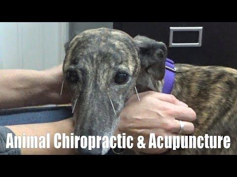 Animal Chiropractic & Acupuncture [2.7]