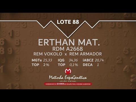 LOTE 88 MATINHA EXPOGENÉTICA 2021