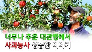 춥기로 유명한 대관령 에서 사과 농사를 성공한...  …