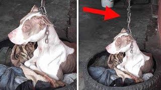 Dieser Hund ist angekettet und kann nicht einmal seinen Kopf senken!