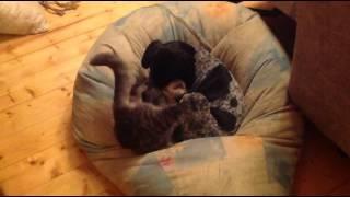 Игры котенка и щенка