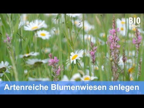 Blumenwiese Anlegen anlegen einer blumenwiese dez 2015