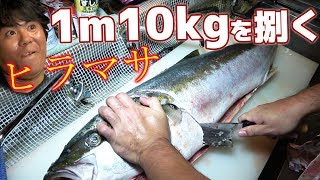 10kg,100cmの巨大ヒラマサを捌いて食べる!【居食屋 武c】