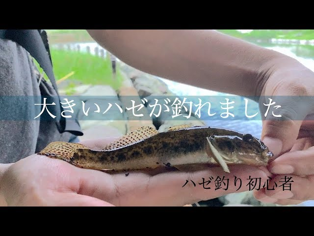 東京下町で人生2度目のハゼ釣り!