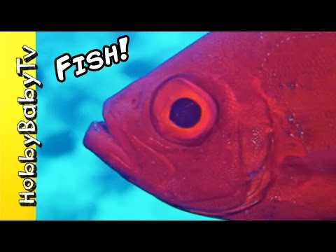 Thumbnail: REAL SURPRISE FISH! Learn Colors with Fishy's Puzzle + Fun with HobbyKids of HobbyBabyTV