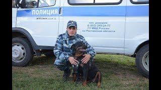 Полицейские помогли усмирить собаку, представляющую опасность для здоровья и жизни граждан