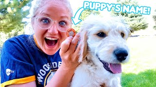 Puppy Name Reveal! The Beach House New Dog!
