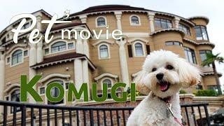 ペットムービー Komugi Pet'movie PV