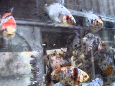 0e6549cd7d5e Ngps visit to presidents fish house - YouTube