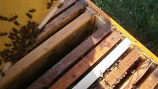 Перевод пчелосемьи с рамки 300 на рамку 145.