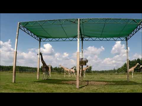 DKP - African Lion Safari Drive Thru