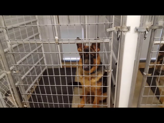 Shield K9 Kennel Tour