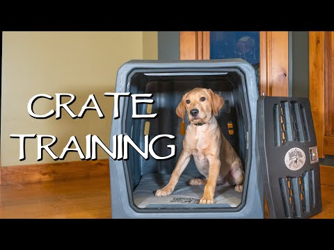 Labrador Retriever Crate Training Your Puppy - How To Avoid Separation Anxiety With Your Dog