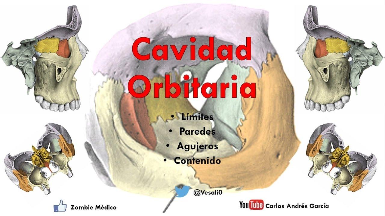 Anatomía - Cavidad Orbitaria (Límites, Paredes, Agujeros, Contenido ...