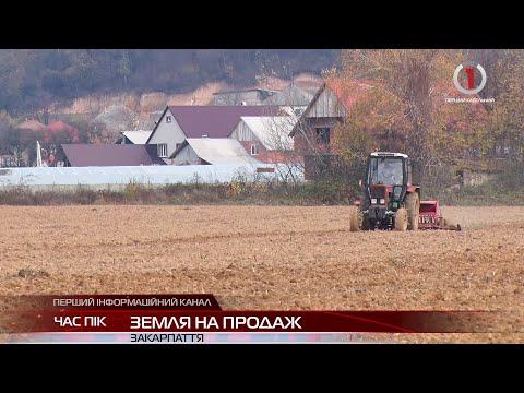 Скасування мораторію: до чого призведе земельна реформа на Закарпатті?