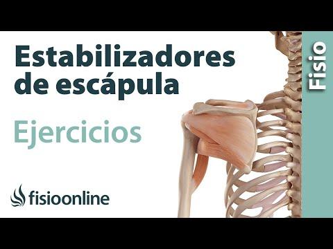 Ejercicios para fortalecer la musculatura estabilizadora de la escápula