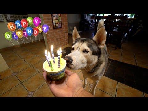 GOHAN'S 5TH BIRTHDAY!