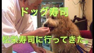 ドッグカフェならぬドッグ寿司屋の松栄寿司にワンズひき連れ行ってきま...