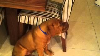 Mason Barking At Himself