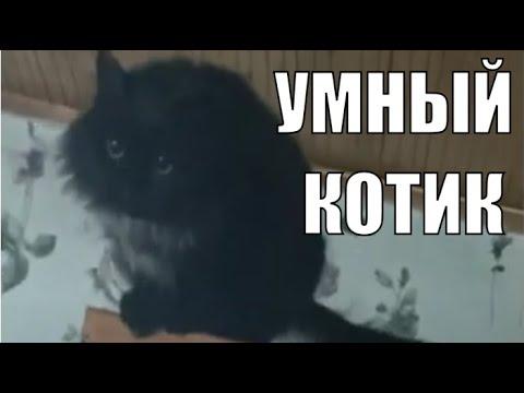 Черный кот Алик умные животные / Black cat Alik smart animals