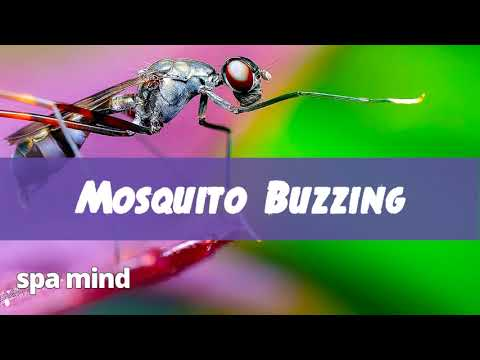 �� Mosquito Sounds (1 Hour) ��