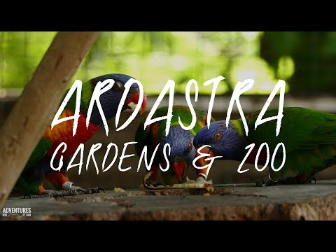 Ardastra Gardens and Zoo Bahamas 4K ULTRA HD