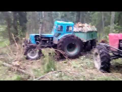Трактор т-40 валит деревья с корнем, тянем 2 прицепа ольхи.