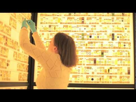 Micrarium: showcasing tiny members of the animal kingdom at the UCL Grant Museum