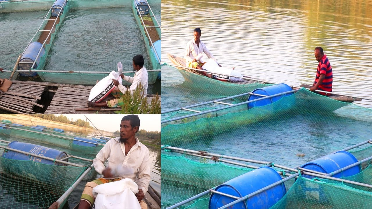 Fish Farming in Different ways in the River | Which will fascinate you-  Amazing Me BD