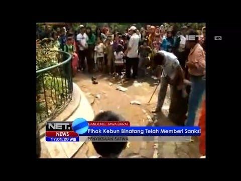 NET17 - Petugas Kebun Binatang Bandung Penyiksa Orangutan Telah Diberi