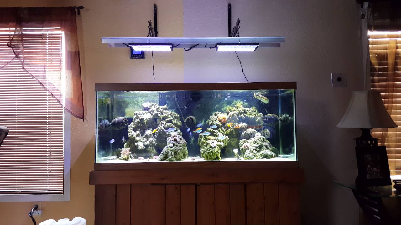 Dsuny Wifi Lights Over 75 Gallon Mixed Reef Youtube