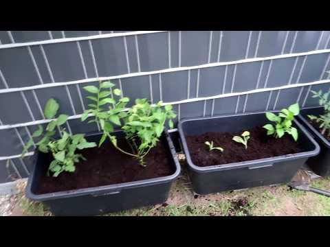 Neue Pflanzen für den Garten   Nici