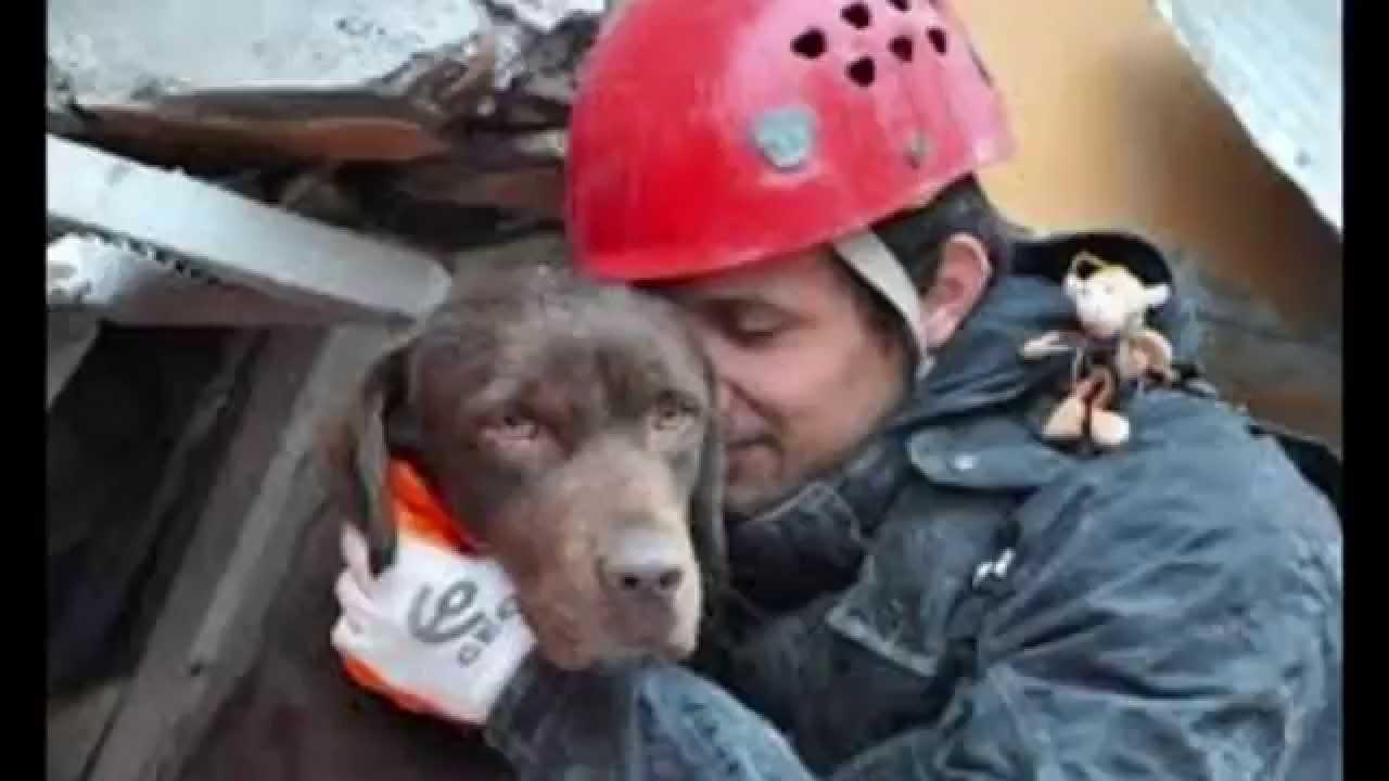 razas de perros de busqueda y rescate