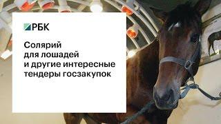 Солярий для лошадей и другие интересные тендеры госзакупок