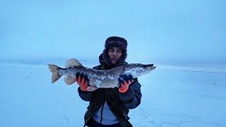 Мой первый трофей! Рыбалка в Коргальджинском Заповеднике 2019-2020! Казахстан!
