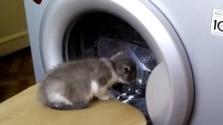 Кошка смотрит как работает стиральная машина