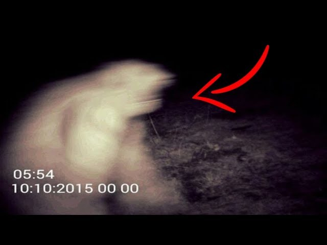 The Mysterious Pennsylvanian White Bigfoot | Sightings & Encounters