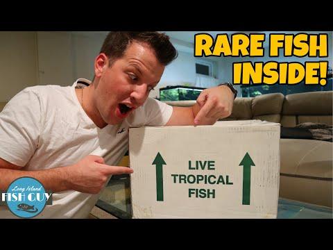 LIVE FISH UNBOXING   Nationwide Aquatics