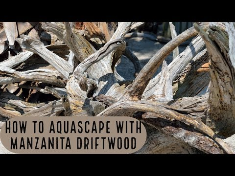 How to Aquascape with Manzanita Driftwood