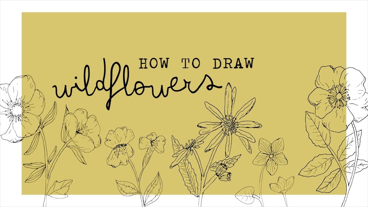 How To Draw Wildflowers Youtube