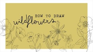 How To Draw Wildflowers Youtube