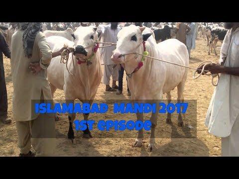 Islamabad Mandi visit 1 - Cow Mandi 2017 - Bakra Mandi 2017 - Bakra Eid 2017