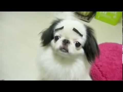 Real Cartoon Dog - japanese chin